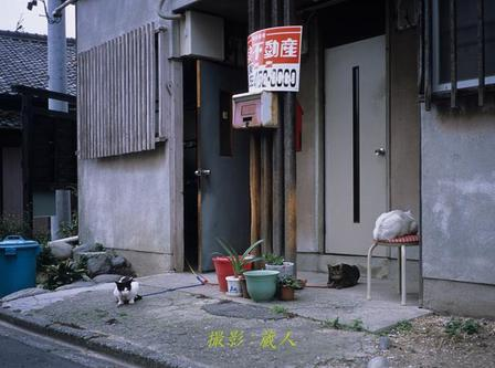 0805__zi009