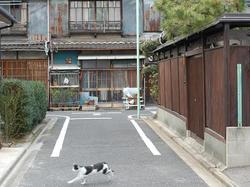 Photo_119